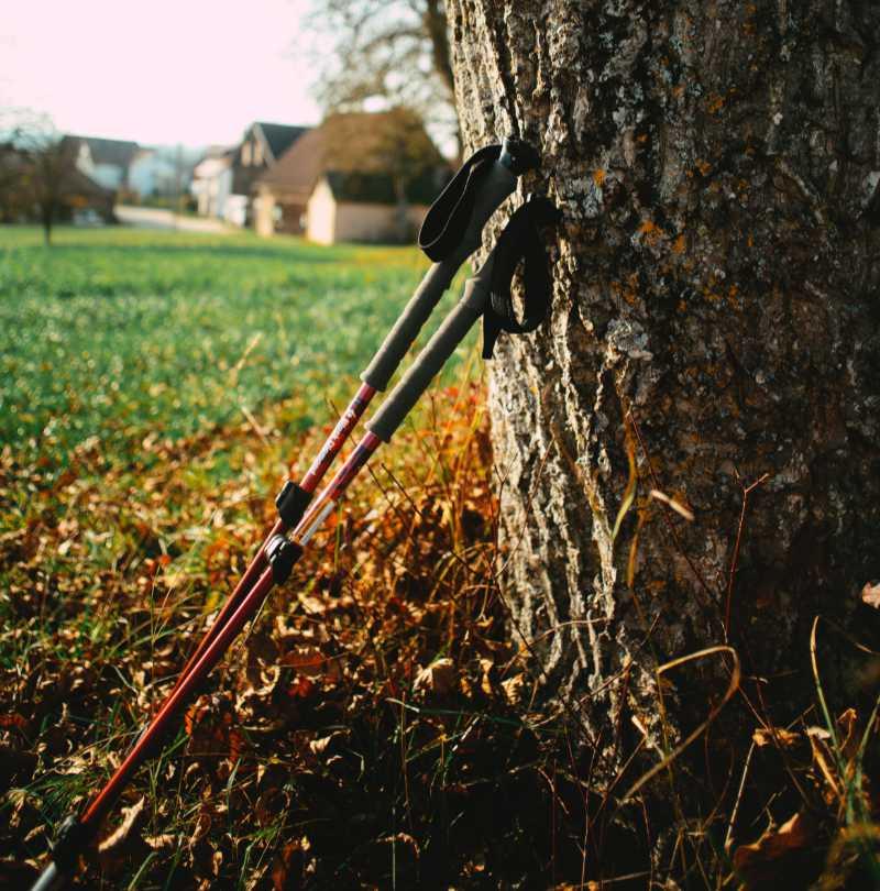 Gåstavar-mot-träd